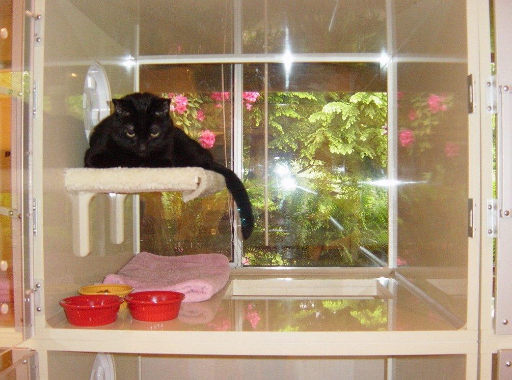 Cat Boarding cattery services at our cats only pet cat hotel